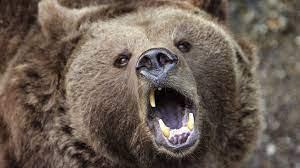 Medveď napadol človeka, ten zomrel